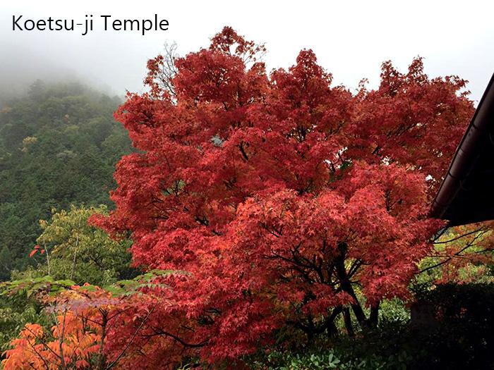 Koetsu-ji-Temple