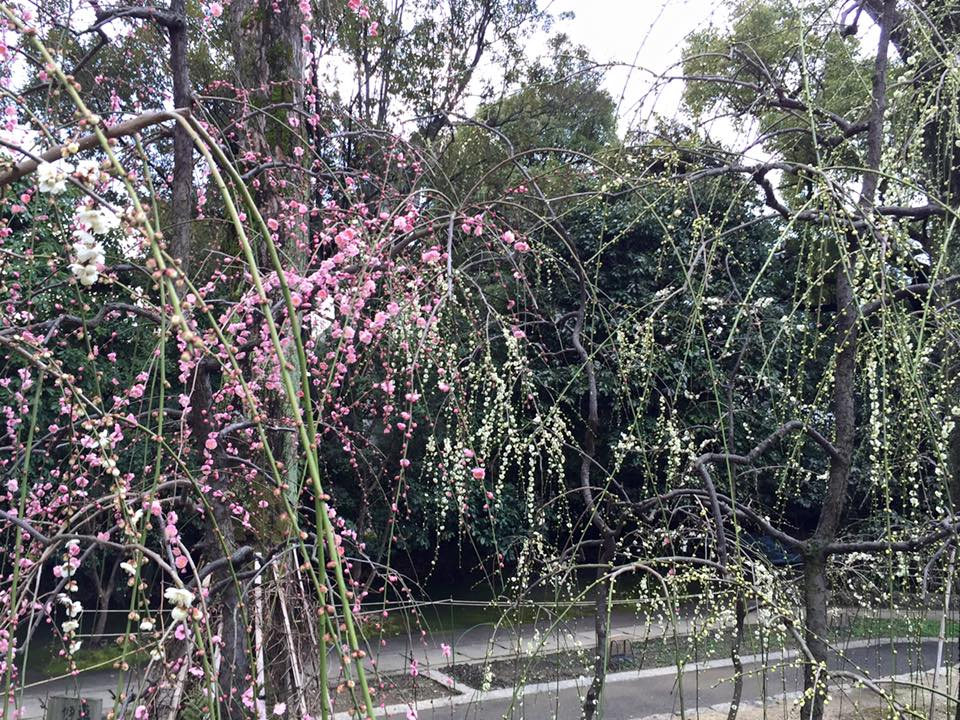 梅の花まだ少し