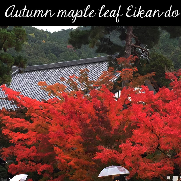 Autumn maple leaf Eikan-do