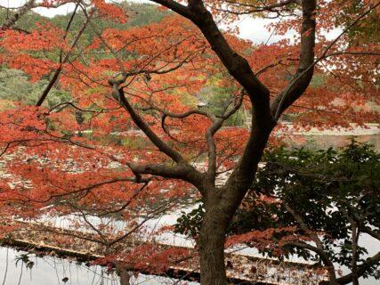 2021 秋の京都 紅葉観光  京都観光タクシー