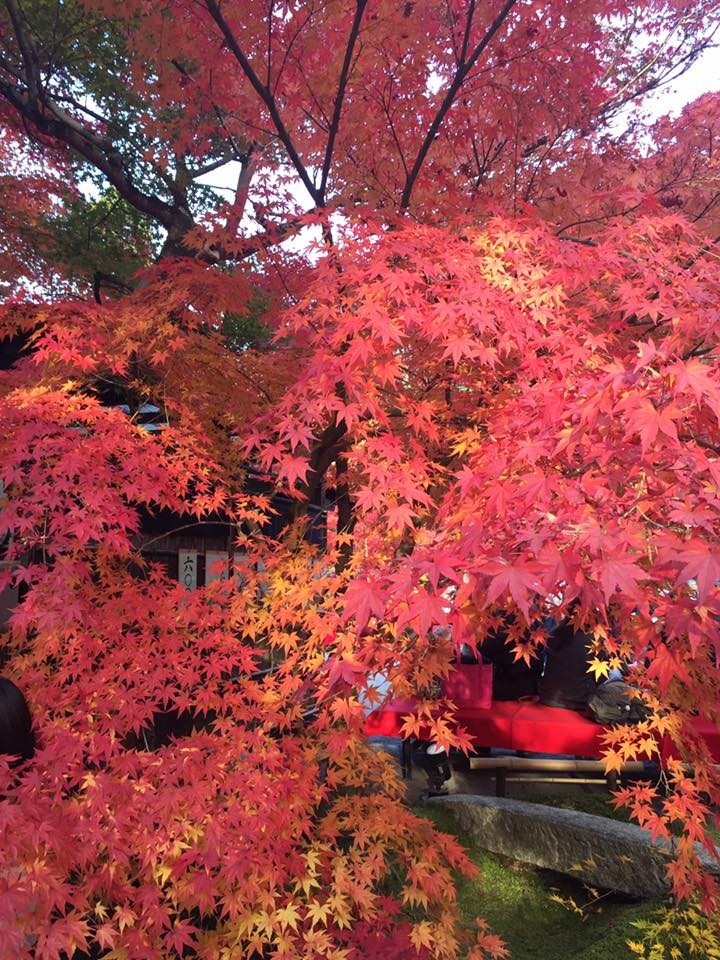 Kyoto Travel Eikando Temple